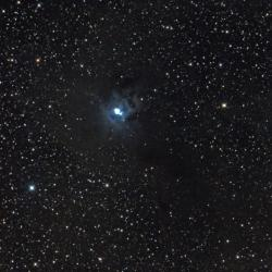 NGC7023_Nébuleuse de l'Iris_Céphée_600mm